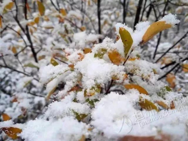 下雪了!哈尔滨到漠河的列车都供暖了,坦洲人还穿短袖开空调