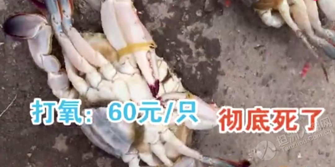"""一秒""""死蟹变活蟹""""!海鲜市场这招太阴险,99%的人都中过招!坦洲街坊要擦亮眼睛!"""