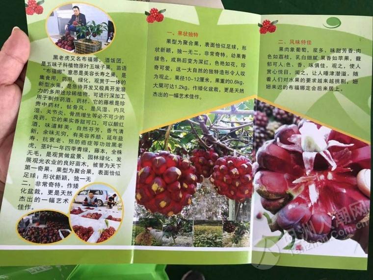 参加火炬区农民丰收节,这些水果坦洲街坊见过吗?