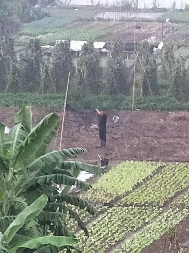 坦洲七村有人捕捉候鸟?引鸟的声音让人无法入睡