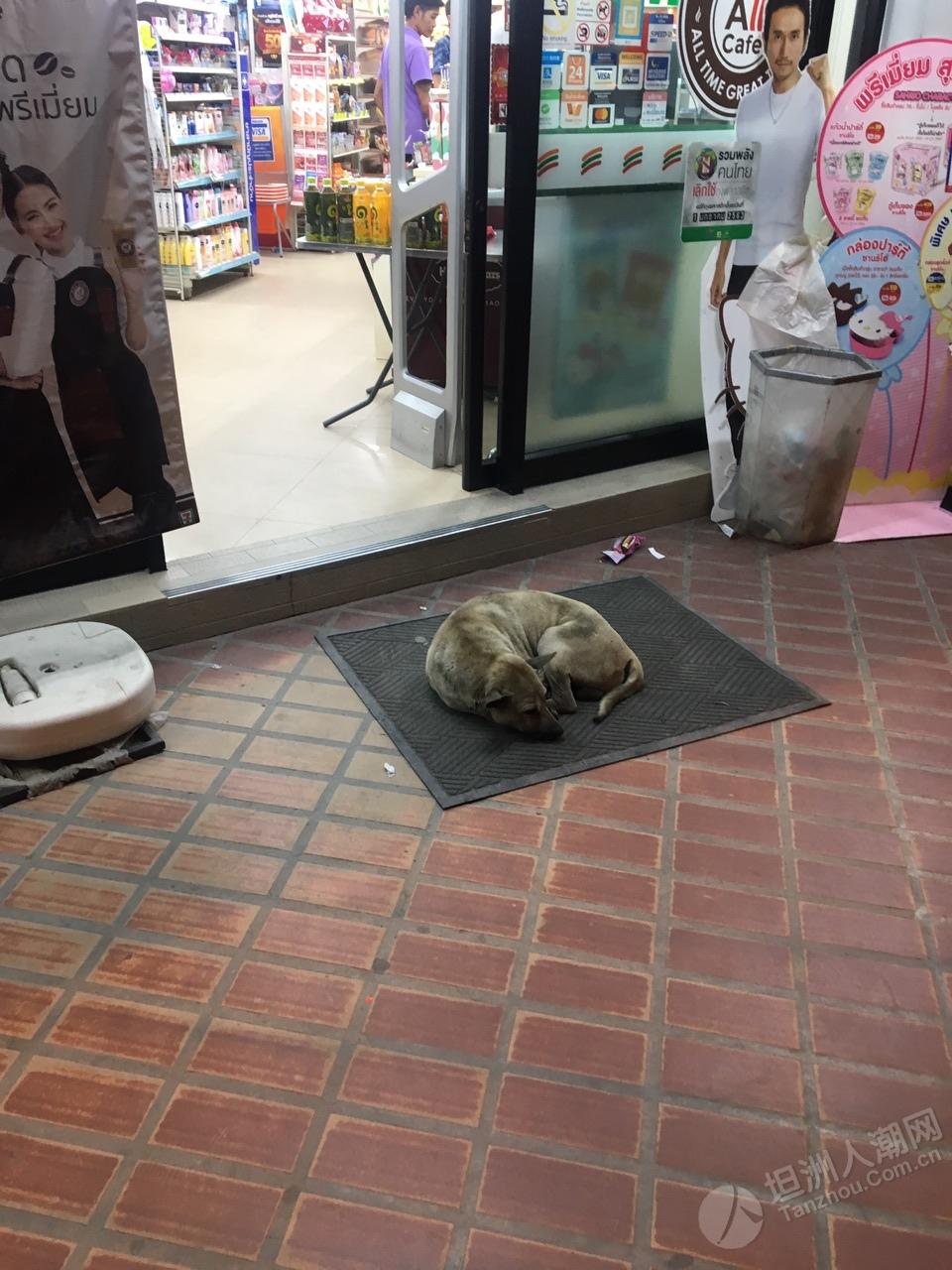 泰国好多流浪狗