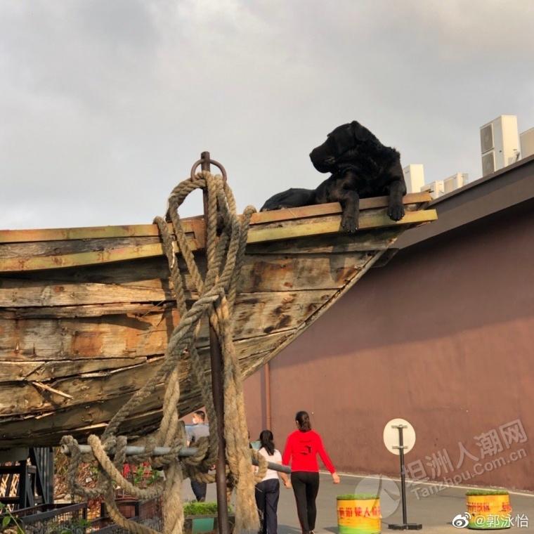 """坦洲""""新晋""""网红:船上的大黑"""
