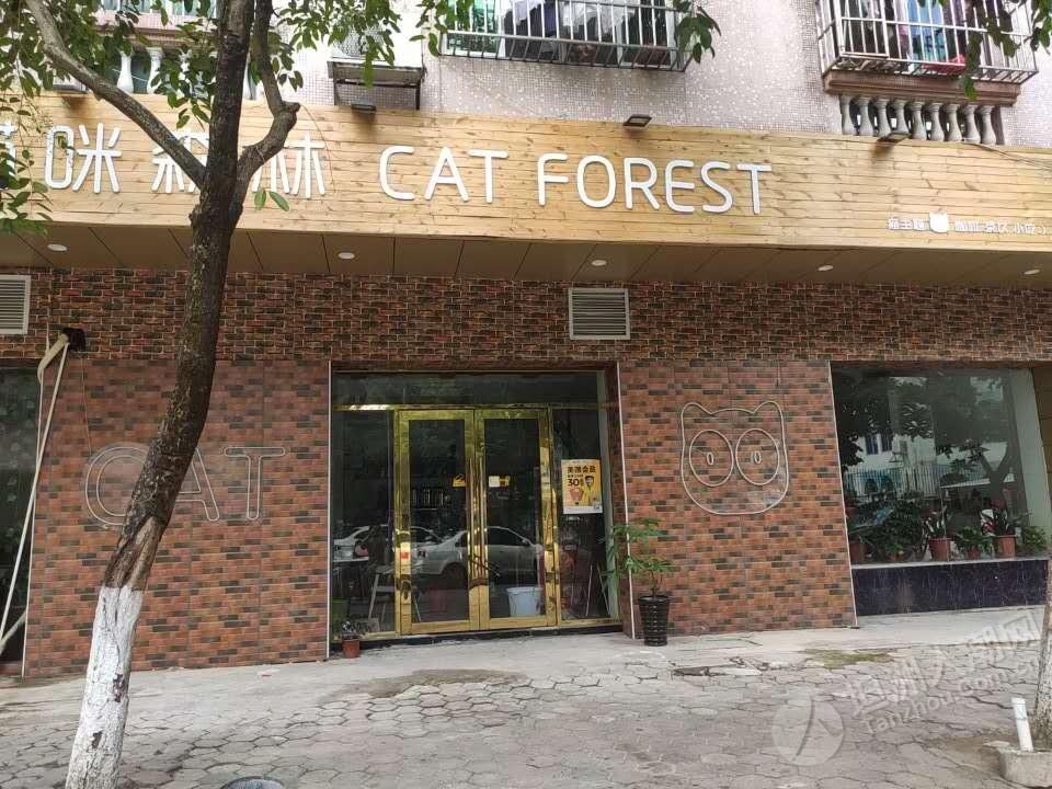 坦洲有间食店可以撸猫
