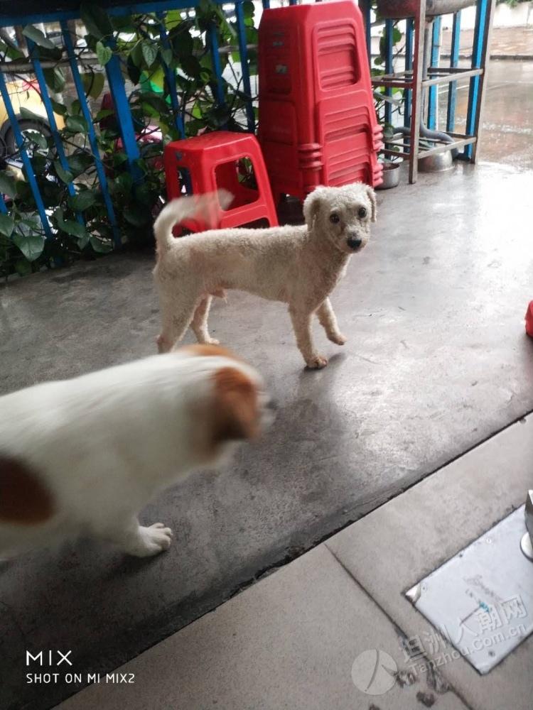 【寻主人】坦洲谁家的狗狗走失了!