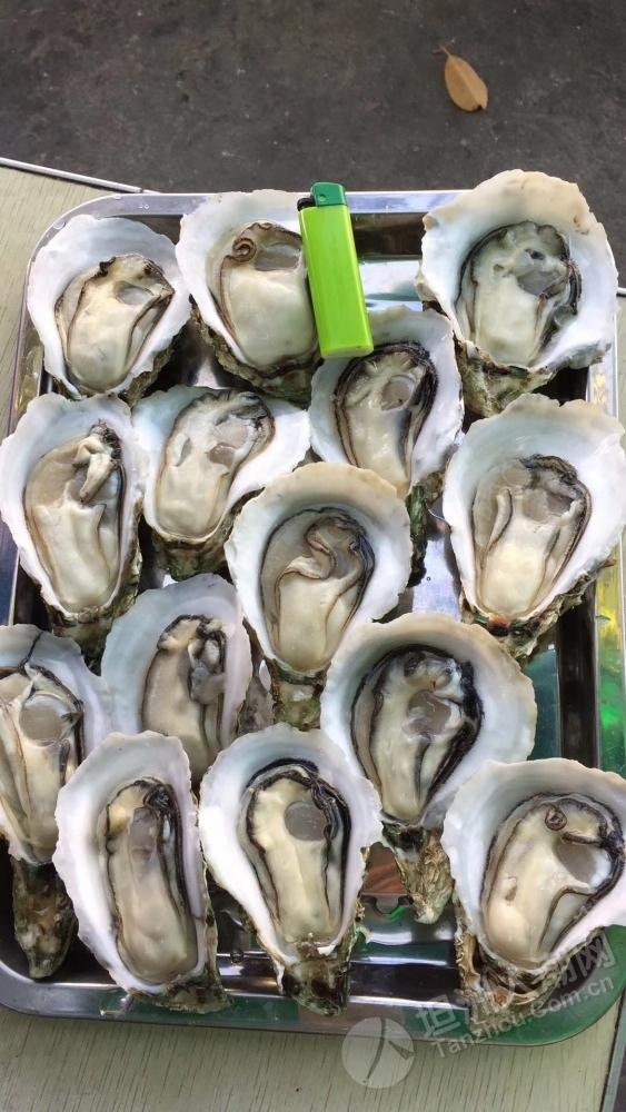 求坦洲的生蚝批发商联系方式