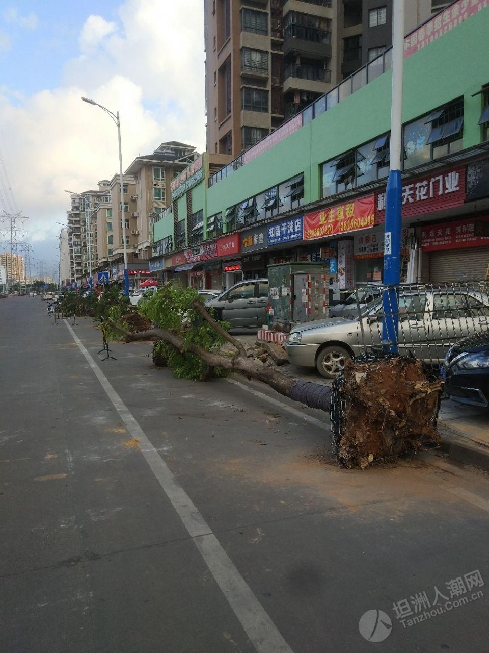 界狮南路正在挖树