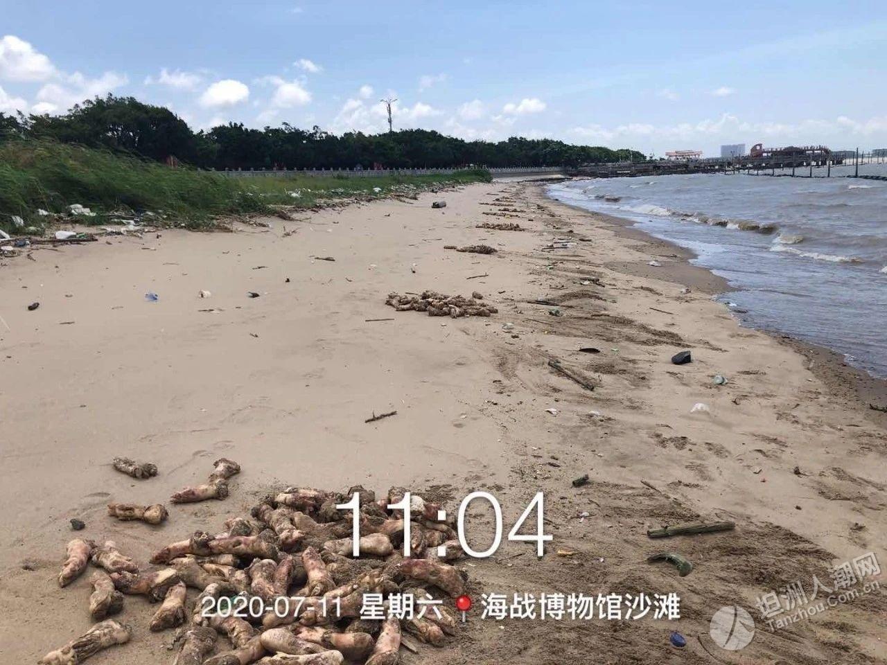 来源初步查清!东莞海滩惊现上万只猪蹄,部分腐烂发臭