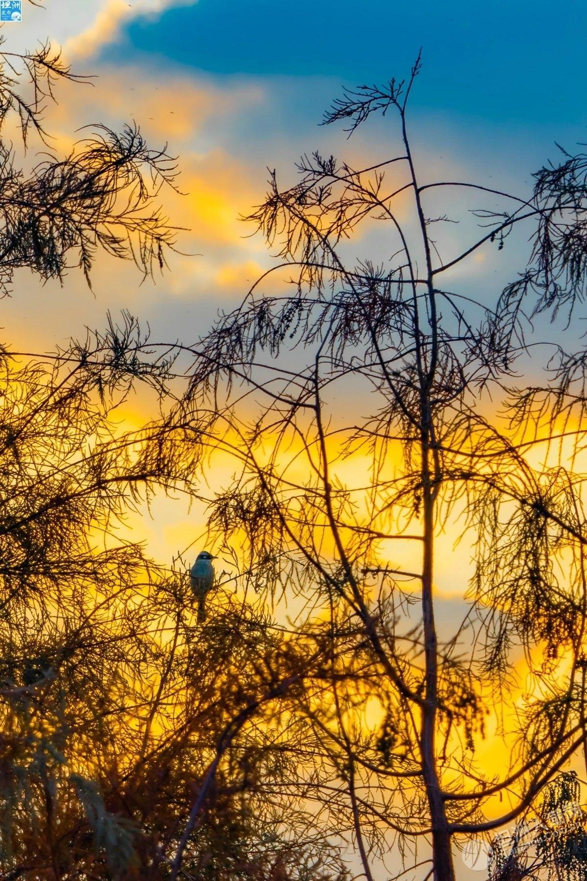 这个春节,来坦洲赴一场碧水红杉之约吧!