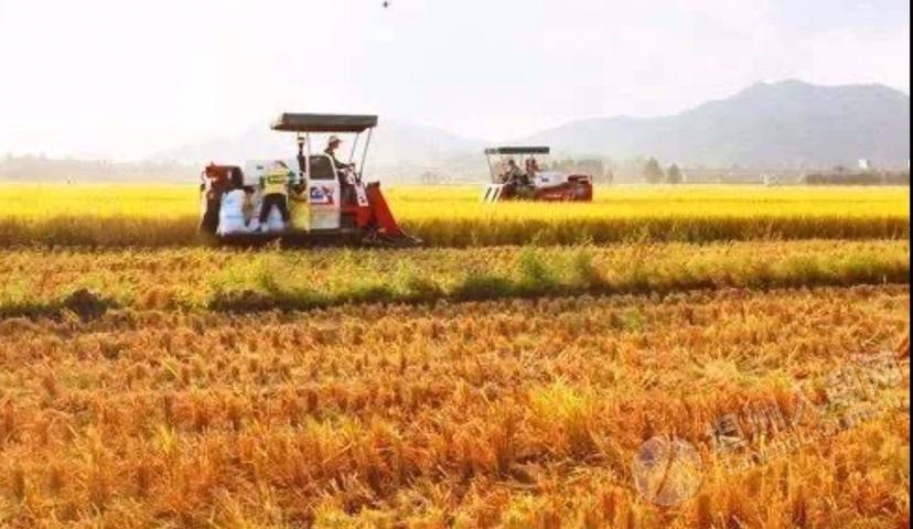 """坦洲""""庄稼医院"""",推动农业现代化上探索实践"""