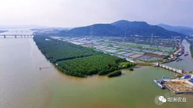 抢先睇!坦洲金斗湾省级湿地公园