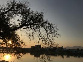 美!坦洲傍晚日落时的景色也可以这么有诗意!